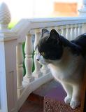 Cat in the garden - Langova