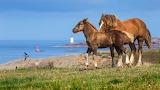 Horses, sea, sky, grass, nature, bird, shore, lighthouse, pair