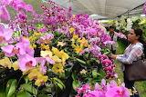 - orquideas 27516782