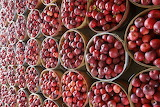 ^ Apples by the bushel basket