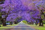 #Grafton NSW Australia