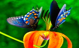 Colours of Butterfly - Colors de Papallona
