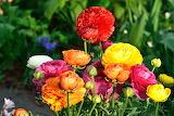 ^ Colorful bouquet