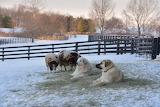 Snowy Guardians