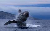 Whale Watch - Hawaii - © 2019 Jeff Sr.
