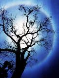 The Elena Tree