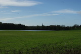 mini lake in a field / inondations dans un champ
