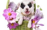 doggie flowers