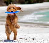 Catching the Frisbee...