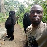 man with gorilla