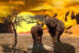 Animal, rhinos, trees, sun, desert
