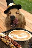 Pilgrim dog