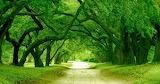 #Orton Plantation Driveway North Carolina