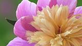 Beautiful Flowers-21