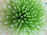 Petals blossom flower green