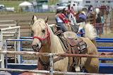 Rodeo Horse - Scrubhiker - Flickr