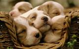 #Sleepy Puppy Pile