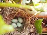 Nido - Nest