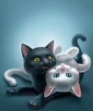Ying and Yang Kitten