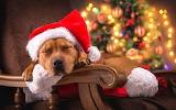 Christmas-tree-dog-sleep-santa-hat