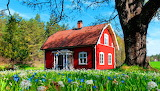 Red cottage in a flowery meadow