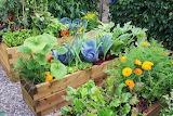 Patio-vegetable-garden