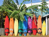 colourful surfboards