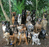 Lots of dogs