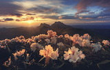 Mountains-morning-flowers