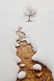 Winter streambed