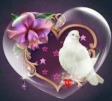 Love duif
