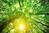 Depositphotos 124564028-stockafbeelding-groene-bos-achtergrond