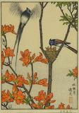 "Birds tumblr dogstardreams ""Sunny Cowbird and Astragalus azalea"""