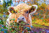 Cute Curly Cow