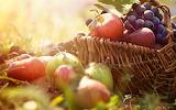 Aa69885332-harvest-