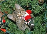 kitten and santa