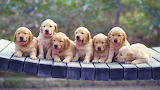 Adorable Puppies...