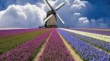 Windmill The Netherlands