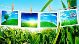 spring picture frame grass