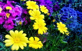 #Colorful Flowers