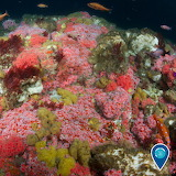 "Animals tumlbr noaasanctuaries Cephalopod ""Cordell Bank Nat. Mar"
