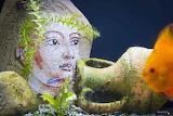 Mosaïque dans un aquarium, Jérôme Clochard
