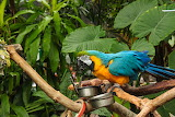 Birds Parrots Branches 541140 1280x853