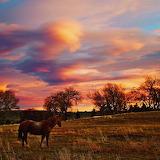 Horse Wyoming sunset