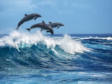 Three beautiful dolphins jumping over breaking waves