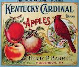 """Apples """"Kentucky Cardinal"""""""