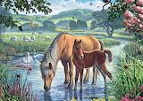 Pony and Foal - Steve Crisp