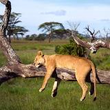 Sleeping in Tanzania, Africa