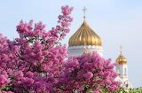 Сирень в Москве