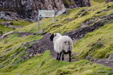 Isle-of-Skye-Scotland 4